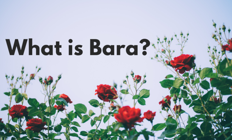 Photo of What is Bara?